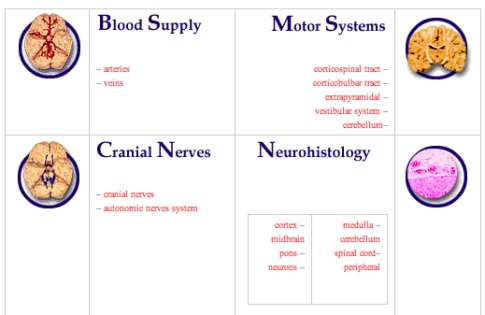 neuroanatomy | Newton Street Study Guide to the brain