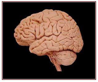 University of Utah: Hyperbrain, a resource for learning neuroanatomy