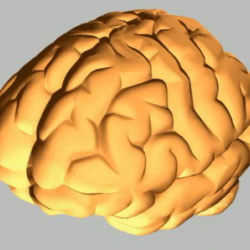 Explore your brain explore your world newton street study guide animation university of bristol animation about the basic functions of the different parts of the brain ccuart Image collections